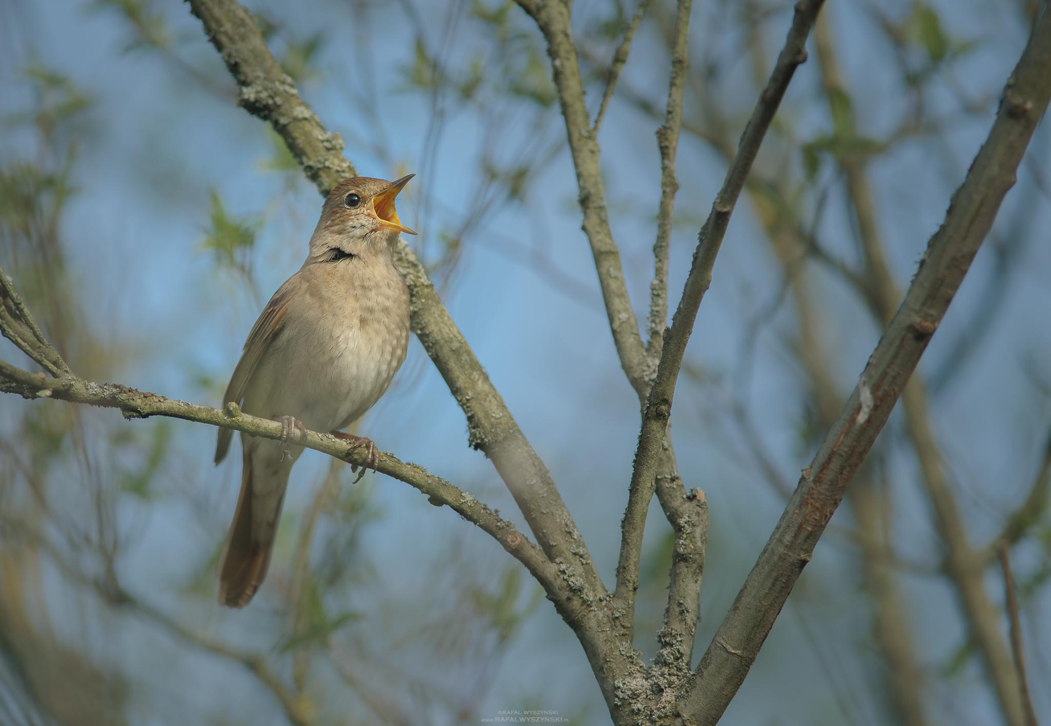 O muzyce i ptakach